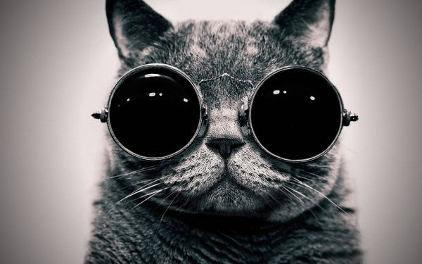 cat_with_glasses-1280x800