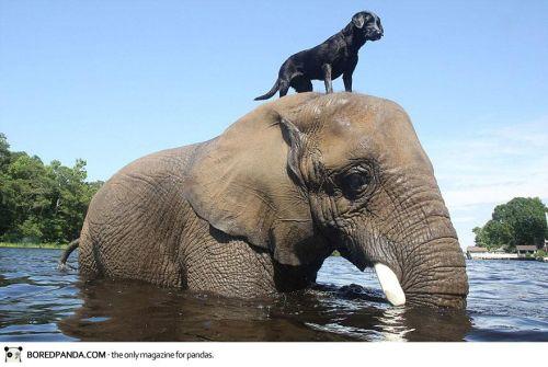 elephant-dog-friendship-bubbles-and-bella-2