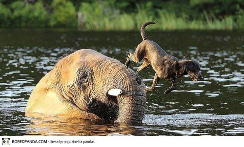 elephant-dog-friendship-bubbles-and-bella-3