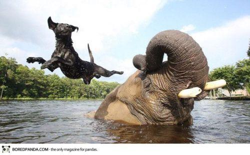 elephant-dog-friendship-bubbles-and-bella-4