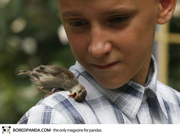 unusual-friendship-boy-sparrow-vadim-veligurov-1